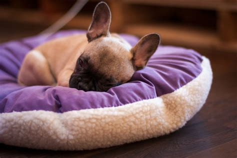 how much should my puppy sleep how much do puppies sleep american kennel club