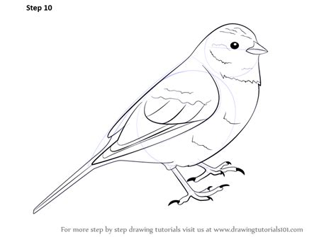 yellow hammer coloring page step by step how to draw a yellowhammer