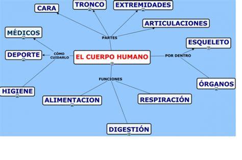 imagenes mapa mental del cuerpo humano mapas conceptuales