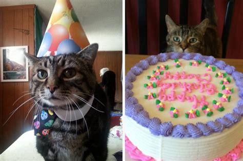 cat birthday birthday cat pictures www pixshark images