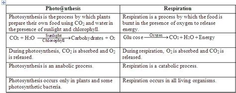 Comparing Photosynthesis And Cellular Respiration Worksheet by Pix For Gt Photosynthesis Vs Cellular Respiration
