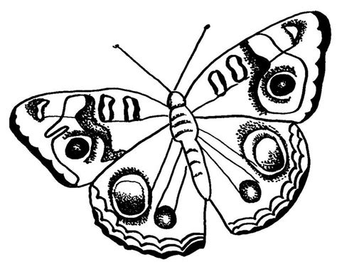 coloring pages of big butterflies butterfly to color coloring home