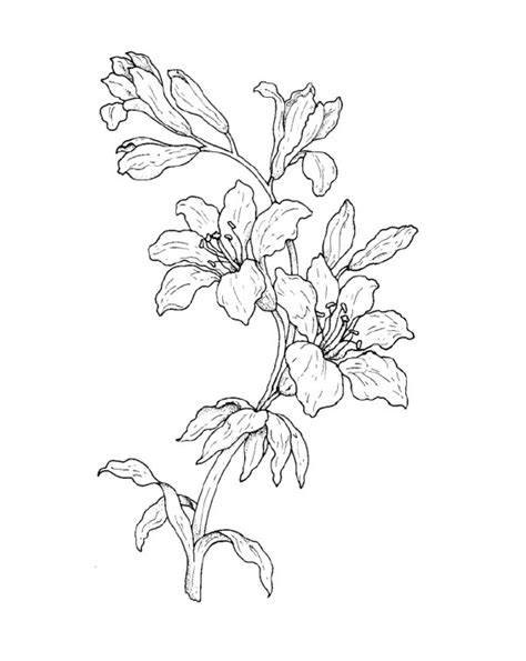 disegni da colorare e stare fiori disegni di fiori da stare disegni da colorare tema fiori