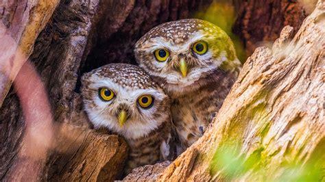 überwachungskamera für tiere die 74 besten s 252 223 e eulen hintergrundbilder