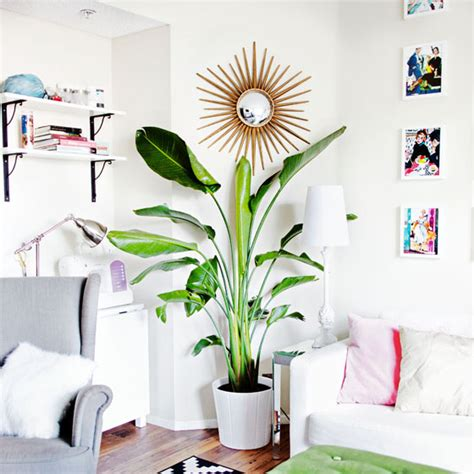 easy apartment plants 8 easy care indoor plants to brighten up your home this