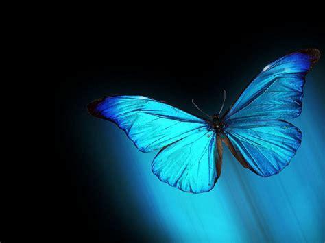 im 225 genes mariposas im 225 genes