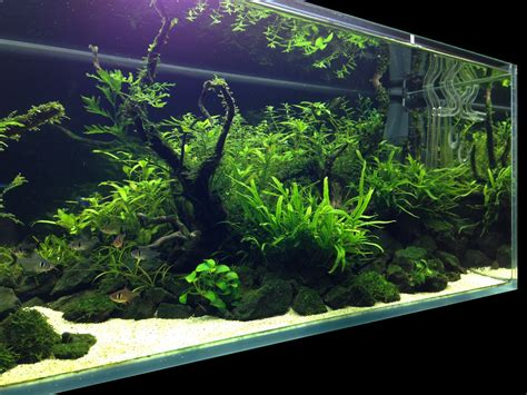 How To Aquascape A Planted Tank by Planted Tank Nature Aquarium Aquascape Aquarien