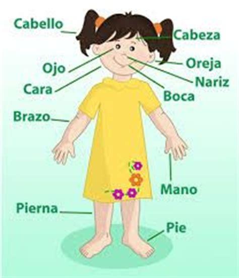 imagenes virtuales del cuerpo humano imagenes del cuerpo humano y sus partes para ni 241 os para