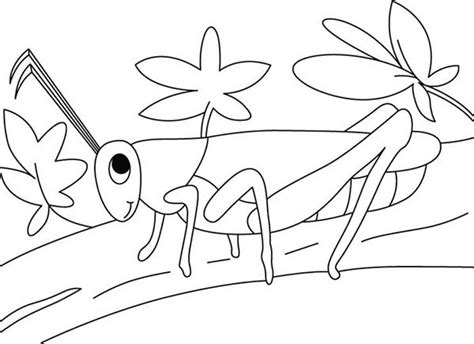 grasshopper   garden coloring page  print