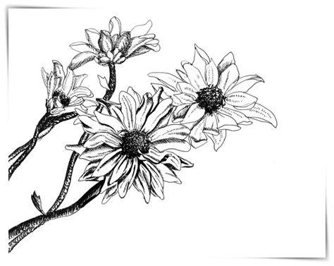 imagenes de kevin flores dibujos de kevin florez a4 dibujo imagenes