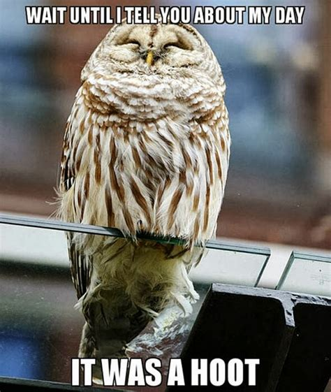 Funny Owl Memes - more funny animal memes 20 pics