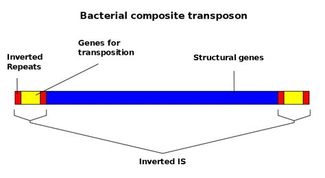Inverted Living by Transposable Element Wikipedia