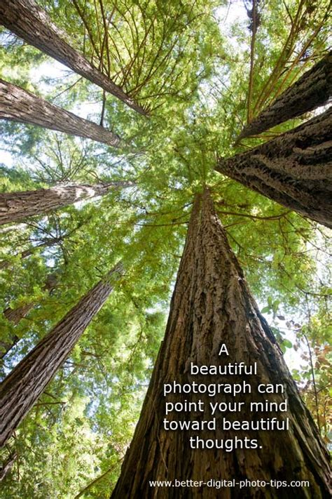 pictures of inspiration 11 inspirational nature photos that will leave you stimulated