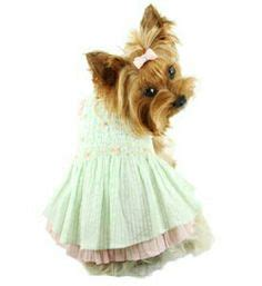 bello toys yorkies shorkie puppies for sale sugar shorkie puppies brown and black shorkie puppies