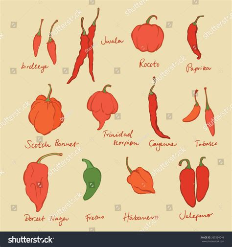 doodle pepper set different chili peppers vector doodle stock vector