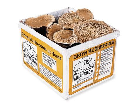 portabella mushroom growing kit grow   mushrooms