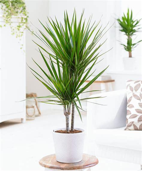 15 beautiful house plants that can actually purify your les 32 meilleures images du tableau oltre il bagno le