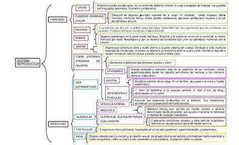 cuadro sinoptico aparato reproductor femenino sistemas reproductores