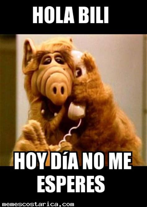 Alf Meme - funny cat eating alf quotes quotesgram search results