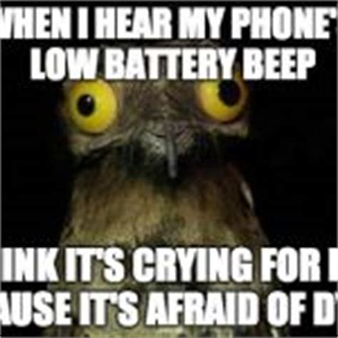 Crazy Bird Meme - crazy eyed bird meme generator imgflip