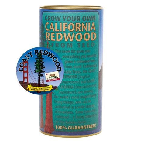 grow your christmas tree company in ca california redwood sequoia sempervirens tree seed grow kit the jonsteen company from
