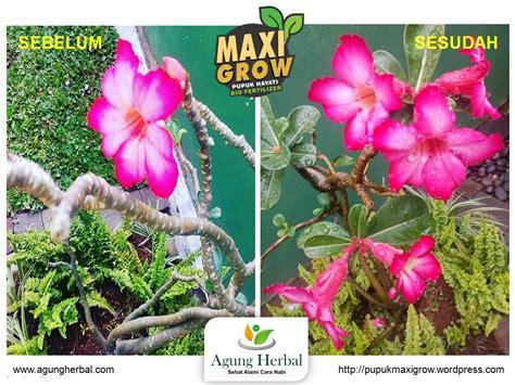 Pupuk Bunga Organik bunga maxigrow pupuk maxigrow