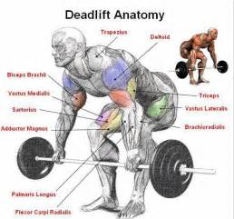 Proper Bench Press Techniques Moronic Monday Your Weekly Stupid Questions Thread Fitness