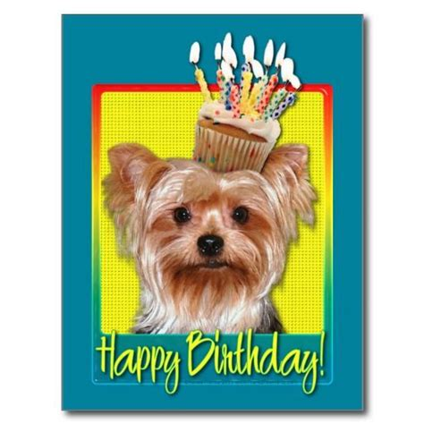 yorkie birthday pictures happy birthday yorkie breeds picture
