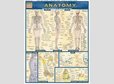Anatomy - Charts   224919 Quick Study Female Urinary System Anatomy