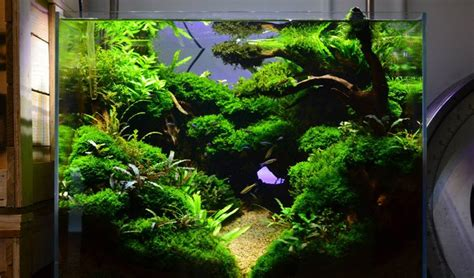 Aquascape Design Australia | distant hollow a dramatic aquascape by exotic aquatics