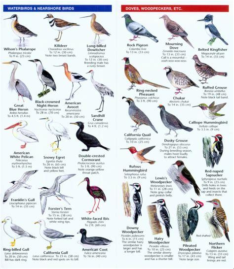 idaho birds a folding pocket guide to familiar species