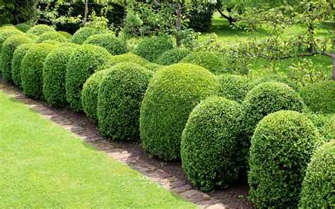 how to put lights on shrubs superior evergreen trees landscaping evergreens fast