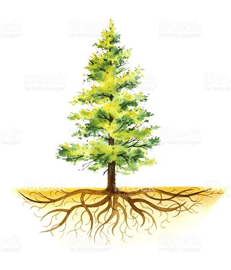 collection christmas trees with roots pictures christmas