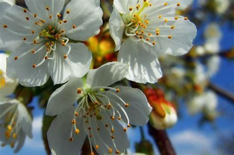pistilli fiore pistilli per fiori colorati