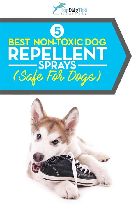 top   dog repellent spray simple   correct bad
