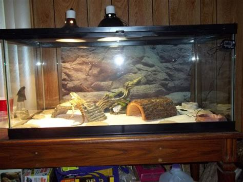 best uvb light for bearded dragons bearded dragon tank www pixshark com images galleries