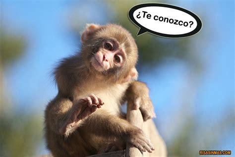 imagenes comicas de monos mono sorprendido