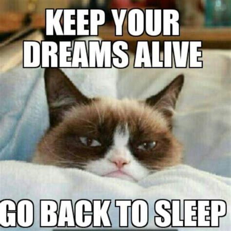 Original Grumpy Cat Meme - 175 best grumpy cat exclusive original material images