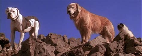 what of is chance from homeward bound homeward bound the journey cast images the voice actors