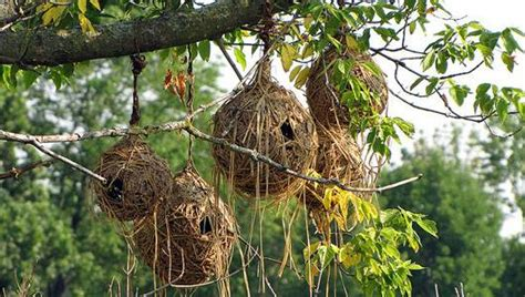 Coolest Treehouse In The World 17 bizarre and beautiful bird nests mnn mother nature