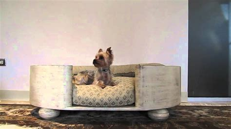 yorkie beds cute yorkie puppy in luxury dog bed youtube