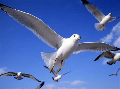 why do birds fly south for the winter why dowhy do