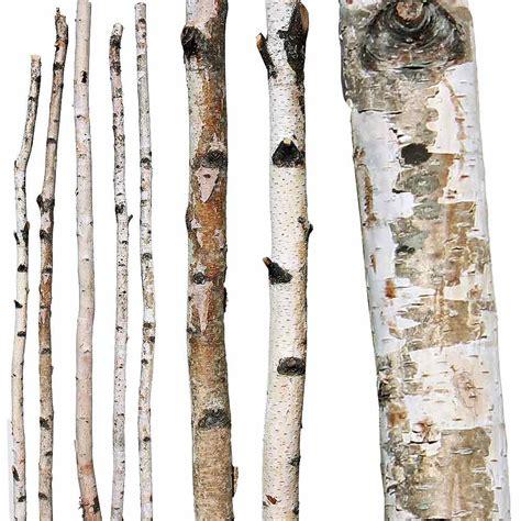 Manzanita Tree Branches Decorative Branches Paper Birch Poles