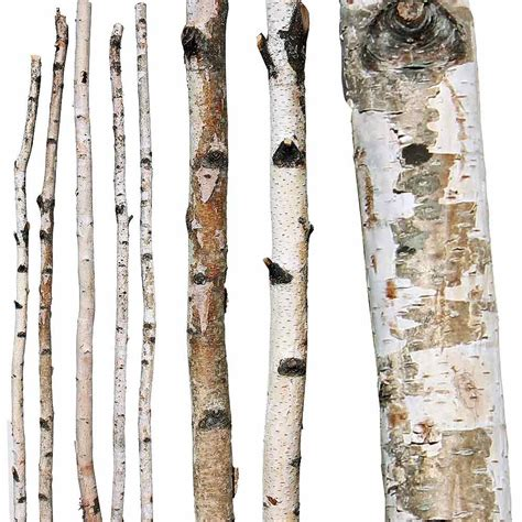 decorative wood branches for sale decorative branches paper birch poles
