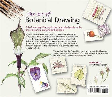 beginner s guide to botanical flower painting books history of painting 25 unique realism in