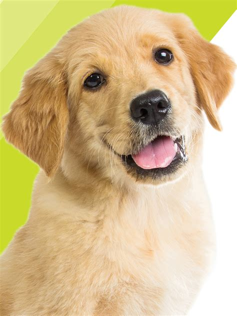 for the of dogs southeastern guide dogs