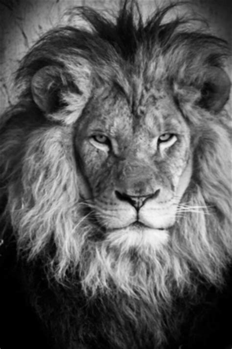 the deep south ruud leeuw leeuw kunst op canvas en poster
