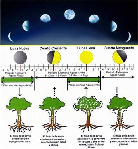fases da lua 2016 para agricultura sabia que o sol n 227 o 233 o 250 nico astro que tem influ 234 ncia na