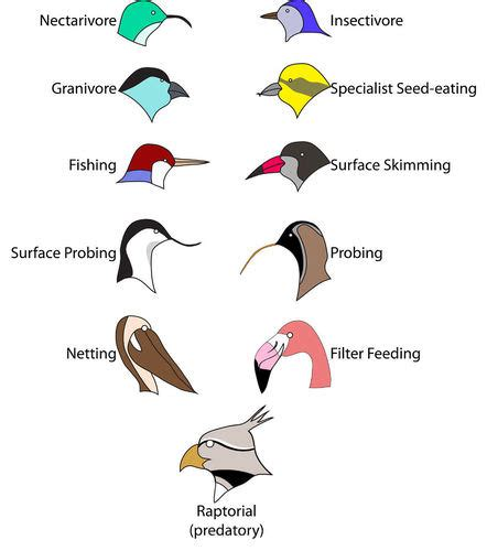 6 1 ecosystems biology libretexts