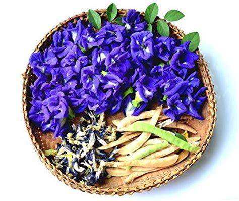 Butterfly Pea Tea 1 hibiscus blue 100 butterfly pea flower tea
